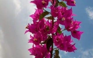 צמחים 224