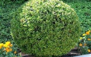 צמחים 231
