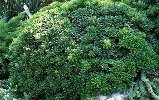צמחים 235