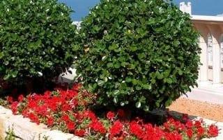 צמחים 236