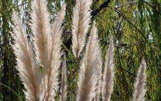 צמחים 243