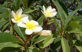 צמחים 245