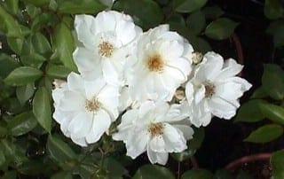 צמחים 247