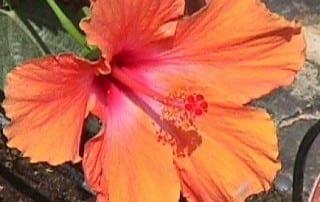 צמחים 248