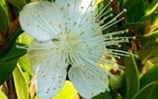 צמחים 250