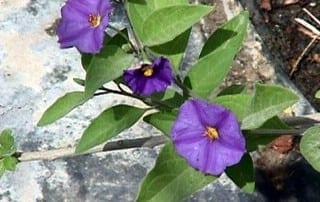 צמחים 254