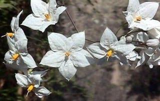 צמחים 256