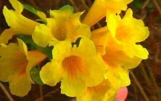 צמחים 258