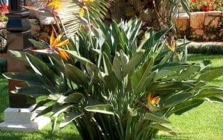 צמחים 259