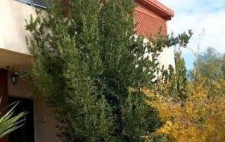 צמחים 263