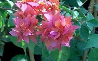 צמחים 268