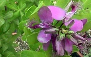 צמחים 270