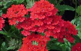 צמחים 272