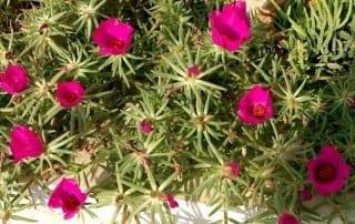 צמחים 273