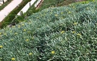 צמחים 280