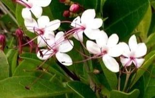 צמחים 284