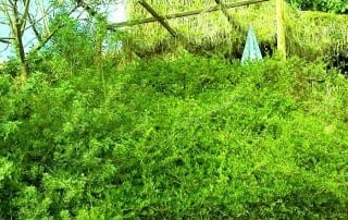 צמחים 286