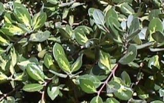 צמחים 288