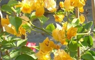 צמחים 283