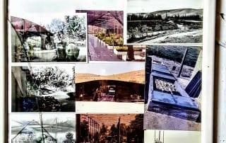 סיור במשתלת אגרו-נוי 186