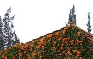 סיור במשתלת אגרו-נוי 121