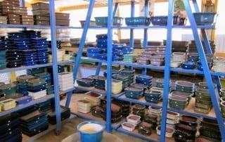 גלריית מוצרים לבונסאי 2