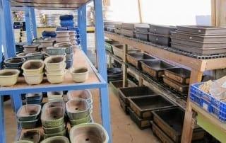 גלריית מוצרים לבונסאי 4
