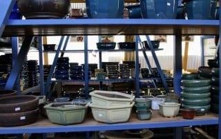 גלריית מוצרים לבונסאי 5
