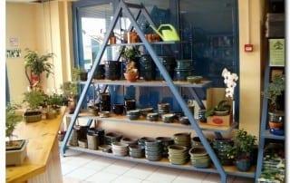 גלריית מוצרים לבונסאי 22