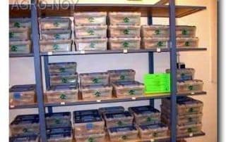 גלריית מוצרים לבונסאי 239