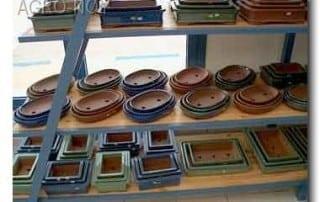 גלריית מוצרים לבונסאי 238