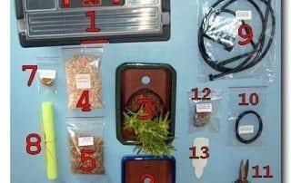 גלריית מוצרים לבונסאי 236