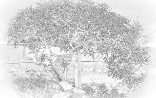 סיור במשתלת הבונסאי 354